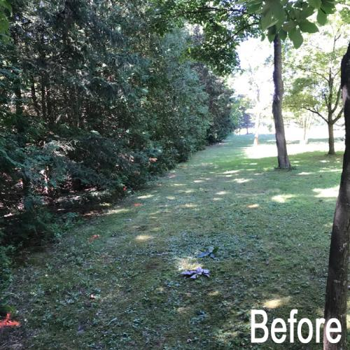 landscaping-18-before-3