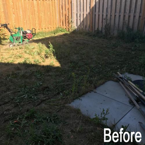landscaping-18-before-5
