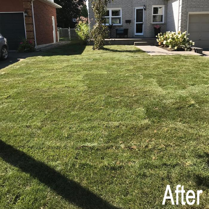Lawn After